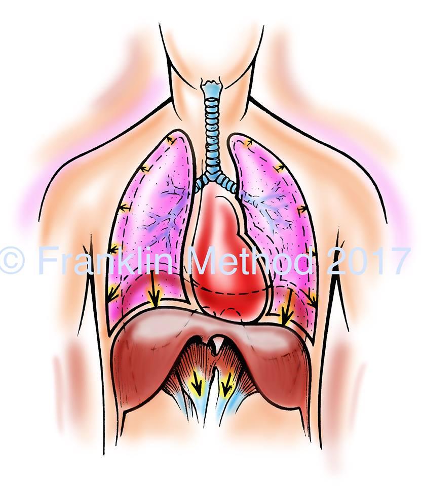 6/23(土)東京 渡邊茂代WS「内臓イメジェリー・肺・呼吸編 ~肺が肩を楽にする~」