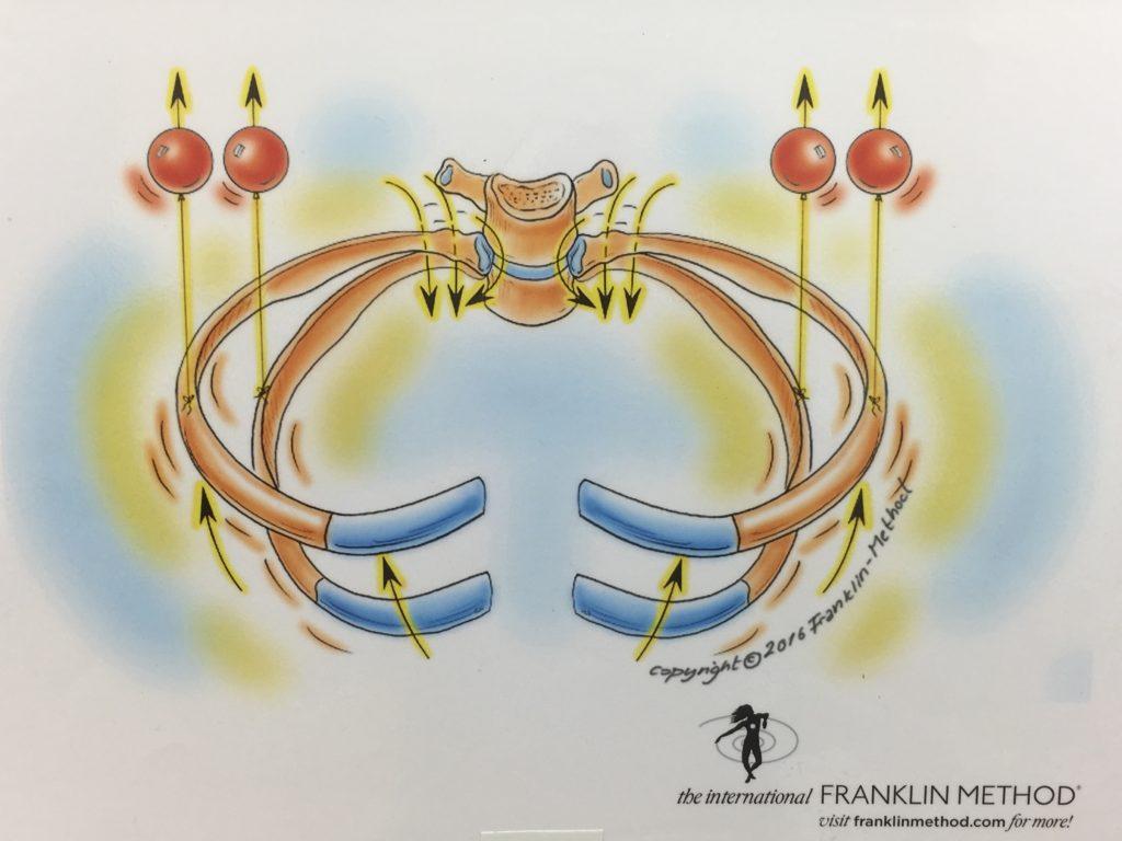 2/18(月)大阪 村田介志WS「上半身5回シリーズ(4) 〜呼吸を感じて学ぶ 1 『横隔膜、肋骨』」