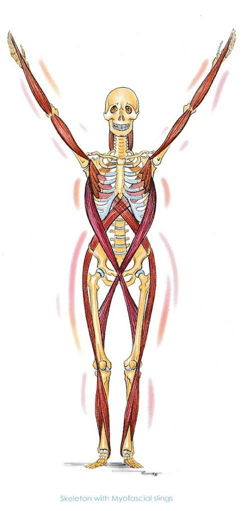 3/9(土)東京 西山晶子WS「筋膜の緊張を解放しよう」